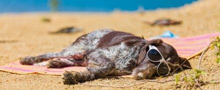 Hund schläft am Strand