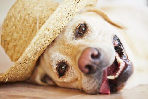 Hund mit Strohhut